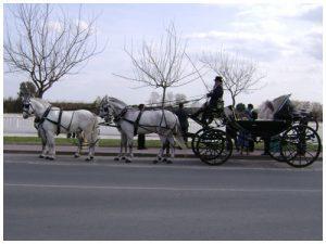 Alquiler coches de caballo Sevilla. CARRUAJES TRONCOSO