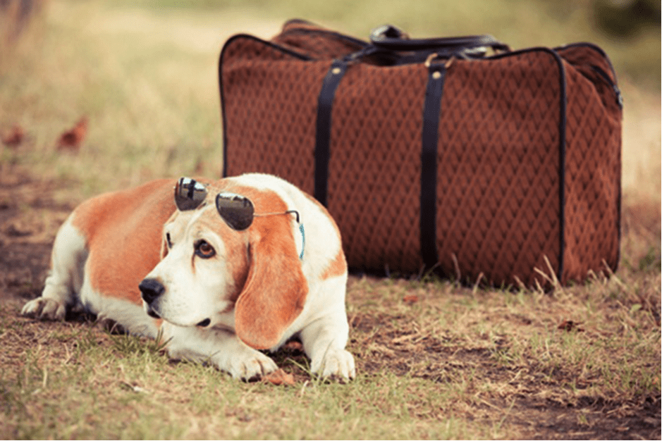 Accesorios viajar mascotas